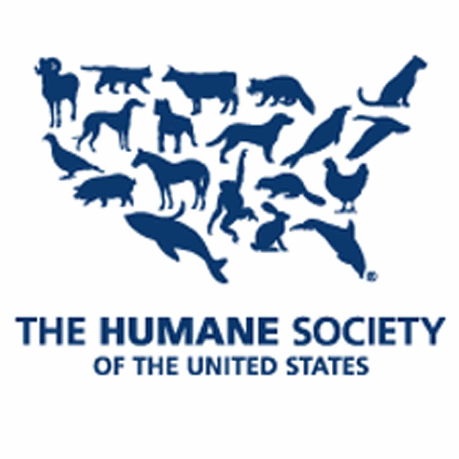 Humane Society-BusyKid